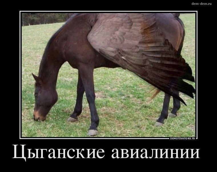 589f1aca47d2c_2.jpg.87f2458e376b26ffc763d6fec64184c4.jpg