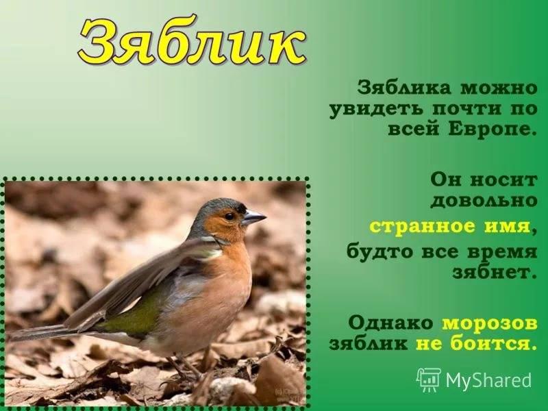 5be9bf76a1c27_.jpg.9e5bc61a26205437802cc71876bf3eed.jpg