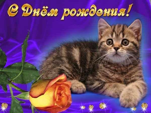 С днем рождения с кошками поздравление открытки с 14